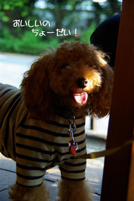 2008.9.7新宿お茶 030 (Small)