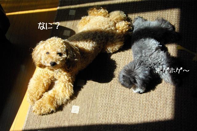 2008.9.13公園&日向ぼっこ 008 (Small)