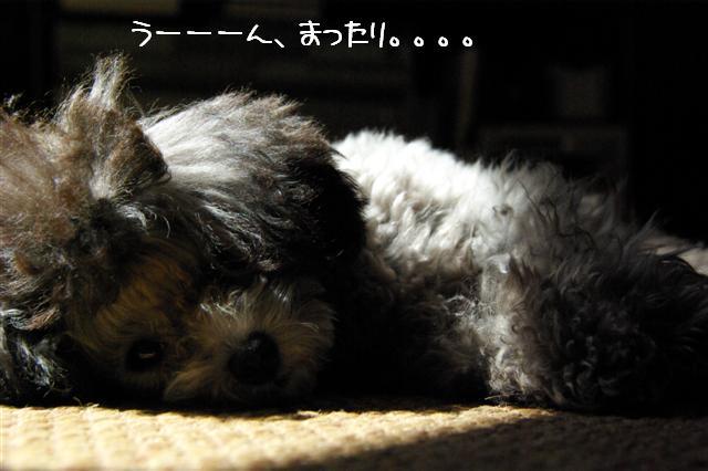 2008.9.13公園&日向ぼっこ 014 (Small)