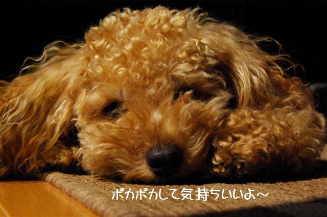 2008.9.13公園&日向ぼっこ 017 (Small)