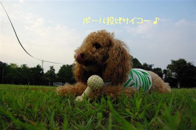 2008.9.13公園&日向ぼっこ 053 (Small)