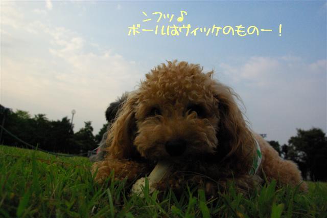 2008.9.13公園&日向ぼっこ 054 (Small)