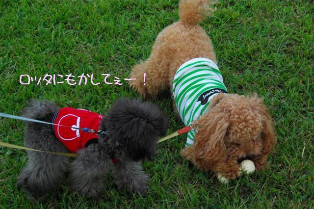 2008.9.13公園&日向ぼっこ 079 (Small)