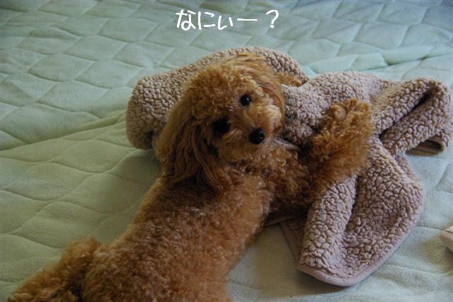 2008.9Fetch&ヴィッケの毛布 002 (Small)