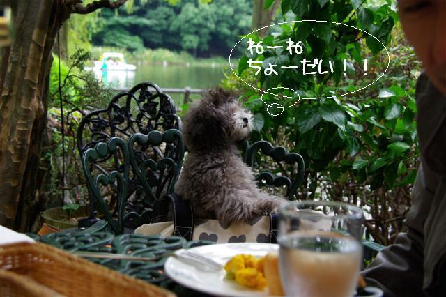 2008.9.28ロニオン 024 (Small)