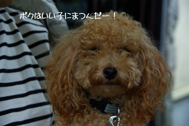 2008.9.28ロニオン 028 (Small)