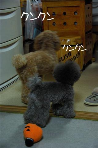 2008.12月豊橋帰省 230 (Small)
