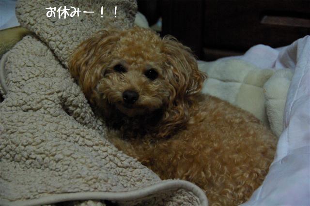2008.12月豊橋帰省 237 (Small)