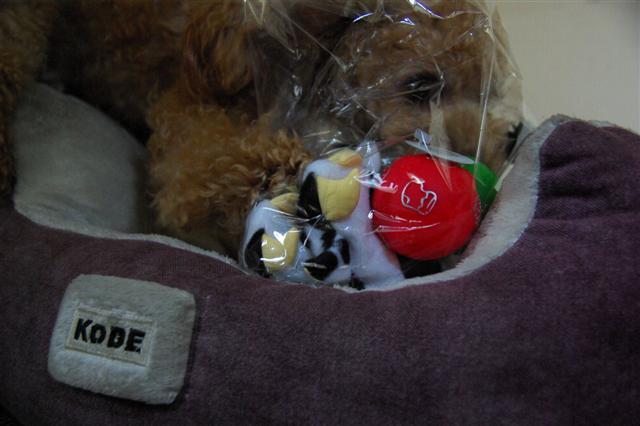 2008.12トリミング&クリスマス会&トトママプレゼント 215 (Small)