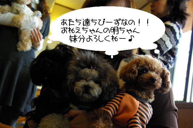 2008.12トリミング&クリスマス会&トトママプレゼント 020 (Small)