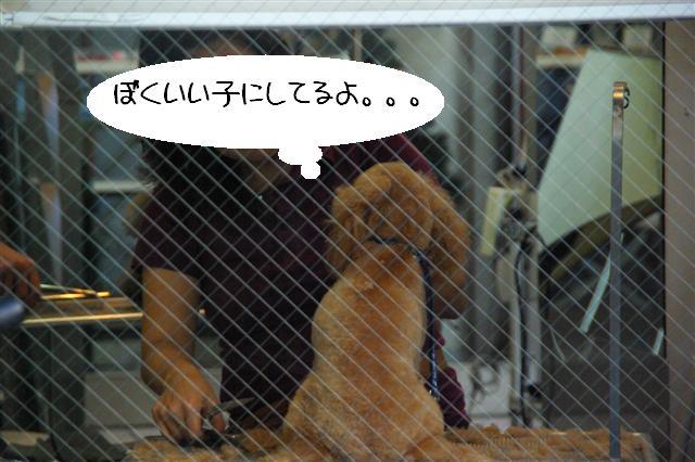 2008.12トリミング&クリスマス会&トトママプレゼント 061 (Small)