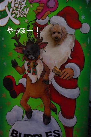 2008.12トリミング&クリスマス会&トトママプレゼント 087 (Small)