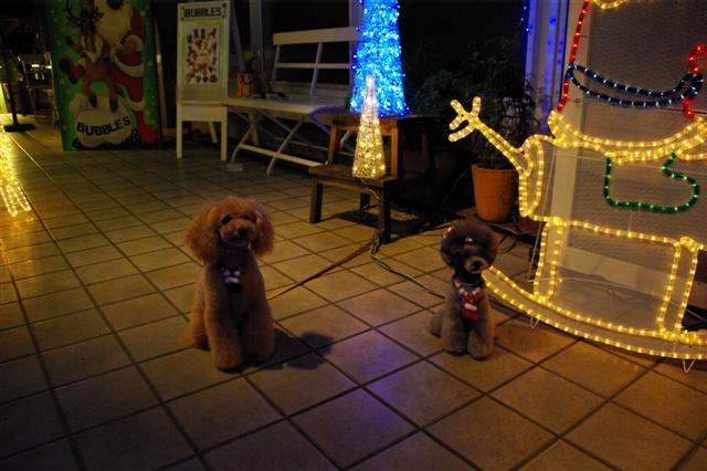 2008.12トリミング&クリスマス会&トトママプレゼント 114 (Small)