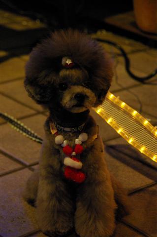 2008.12トリミング&クリスマス会&トトママプレゼント 116 (Small)