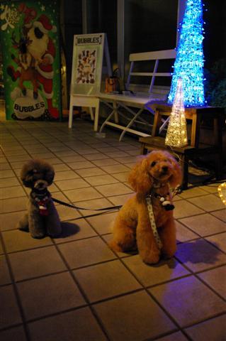 2008.12トリミング&クリスマス会&トトママプレゼント 127 (Small)