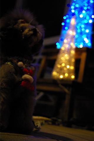 2008.12トリミング&クリスマス会&トトママプレゼント 157 (Small)