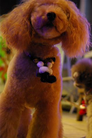 2008.12トリミング&クリスマス会&トトママプレゼント 187 (Small)