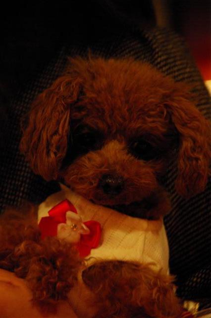 2008.12トリミング&クリスマス会&トトママプレゼント 234 (Small)