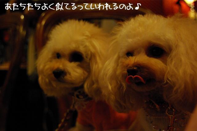 2008.12トリミング&クリスマス会&トトママプレゼント 272 (Small)