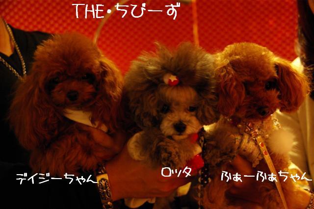 2008.12トリミング&クリスマス会&トトママプレゼント 337 (Small)