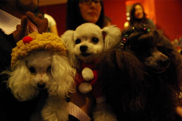 2008.12トリミング&クリスマス会&トトママプレゼント 296 (Small)
