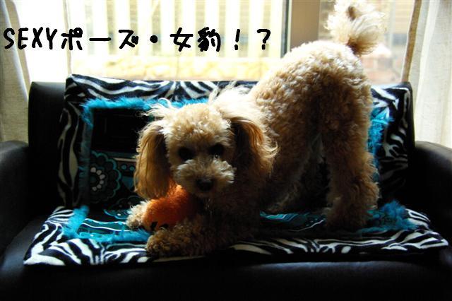 2008.12クリスマスケーキ 055 (Small)