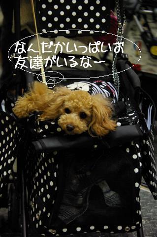 2008.12.20ジャパンドッグフェスティバル&航空公園、モカちゃんプレゼント 003 (Small)