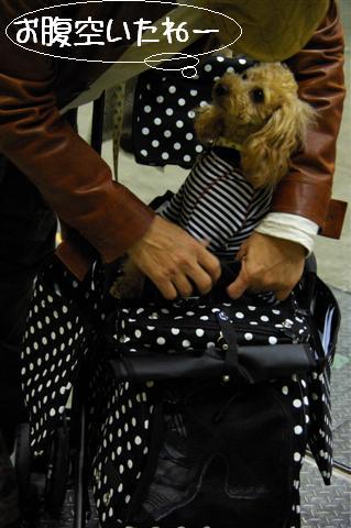 2008.12.20ジャパンドッグフェスティバル&航空公園、モカちゃんプレゼント 004 (Small)