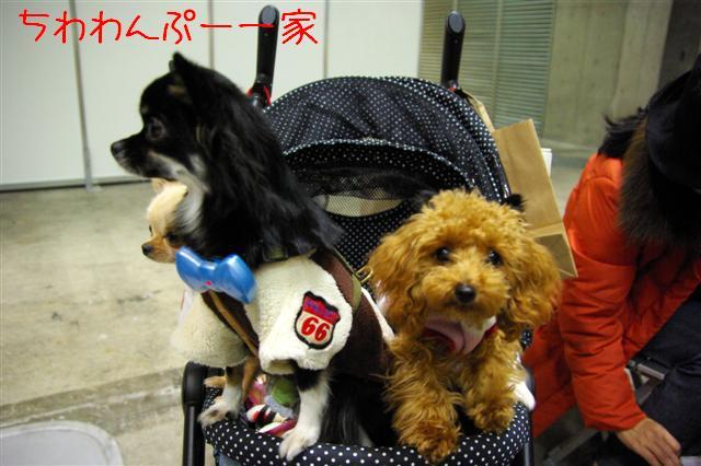 2008.12.20ジャパンドッグフェスティバル&航空公園、モカちゃんプレゼント 017 (Small)