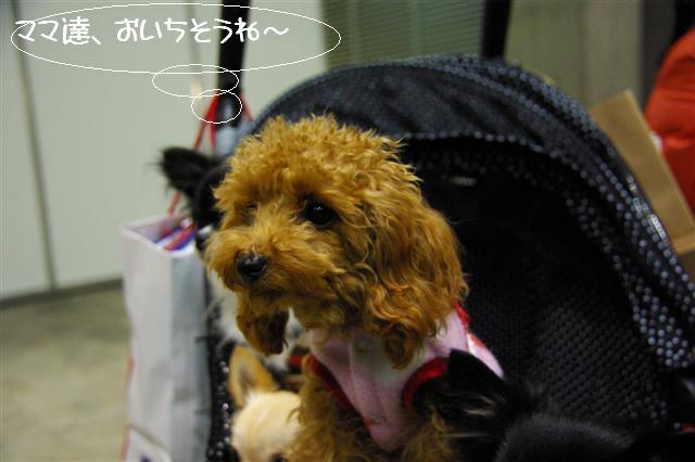2008.12.20ジャパンドッグフェスティバル&航空公園、モカちゃんプレゼント 032 (Small)