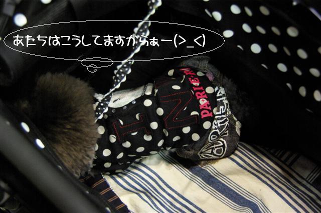2008.12.20ジャパンドッグフェスティバル&航空公園、モカちゃんプレゼント 036 (Small)