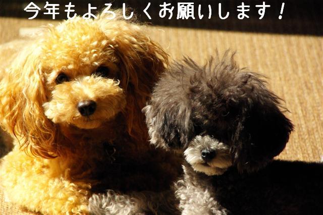 2008.10.11ハローウィンプレゼント&日向ぼっこ 001 (Small) (2)