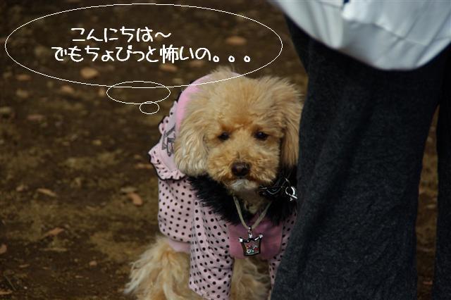 2009.1.12トトオズちゃんと 015 (Small)
