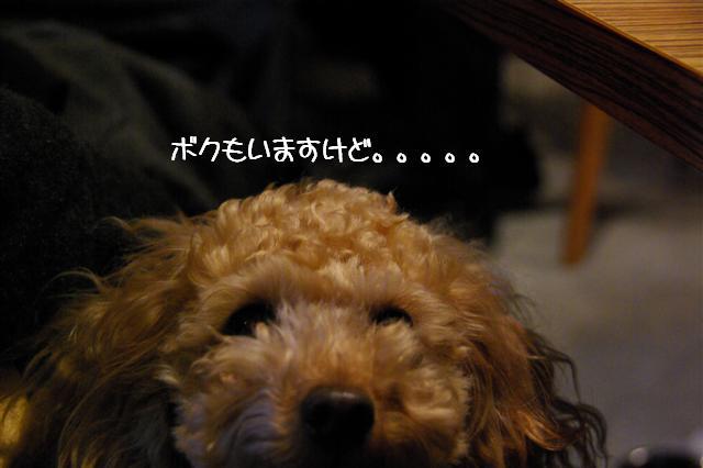 2009.1.12トトオズちゃんと 035 (Small)