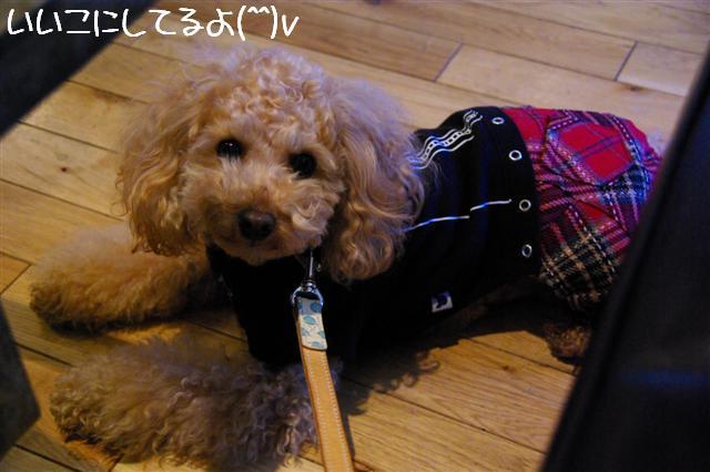 2009.1.23.25トトオズ家&wan lifeプチレッスン 056 (Small)