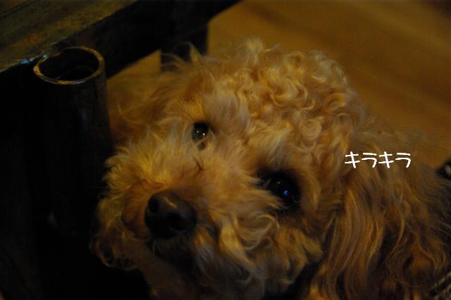 2009.1.23.25トトオズ家&wan lifeプチレッスン 043 (Small)