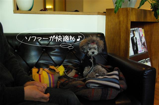 2009.1.23.25トトオズ家&wan lifeプチレッスン 068 (Small)