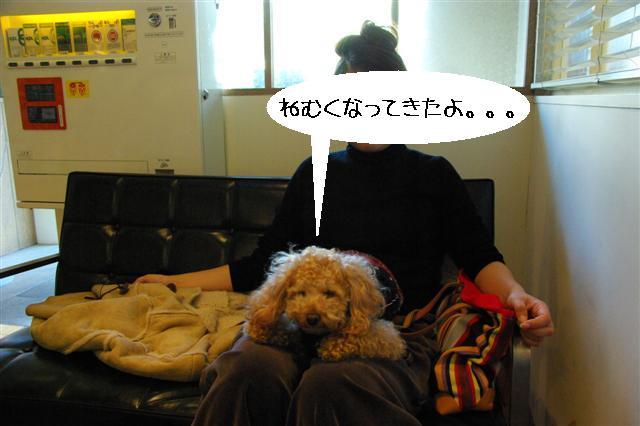 2009.1.23.25トトオズ家&wan lifeプチレッスン 099 (Small)