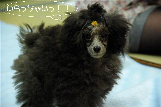 2009.1.23.25トトオズ家&wan lifeプチレッスン 137 (Small)