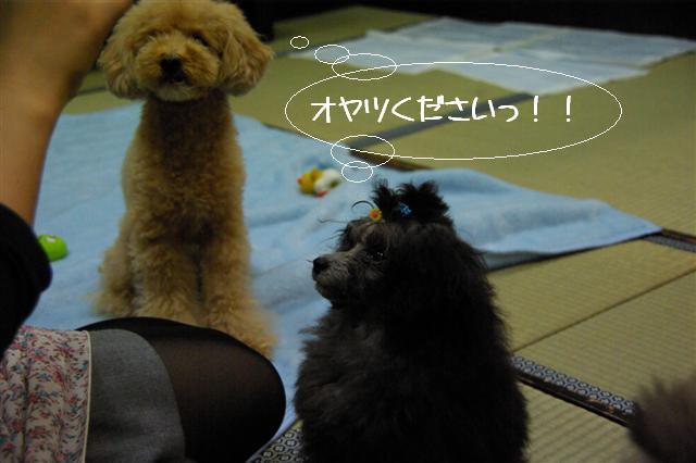 2009.1.23.25トトオズ家&wan lifeプチレッスン 151 (Small)