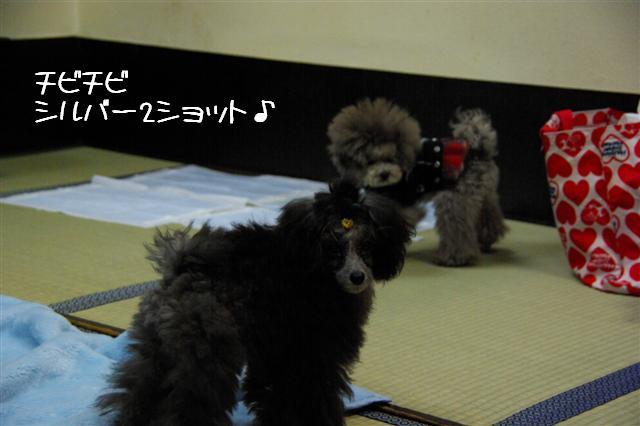 2009.1.23.25トトオズ家&wan lifeプチレッスン 155 (Small)