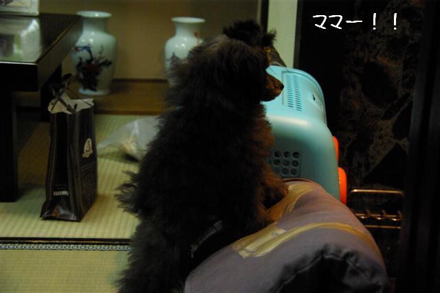 2009.1.23.25トトオズ家&wan lifeプチレッスン 159 (Small)