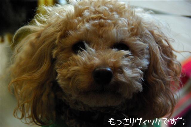 2009.1.23.25トトオズ家&wan lifeプチレッスン 183 (Small)
