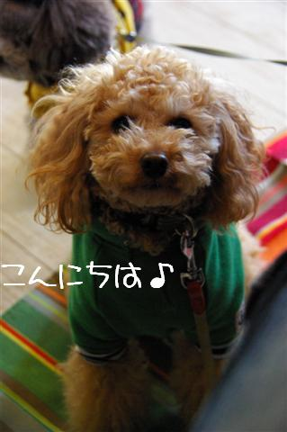 2009.1.23.25トトオズ家&wan lifeプチレッスン 185 (Small)