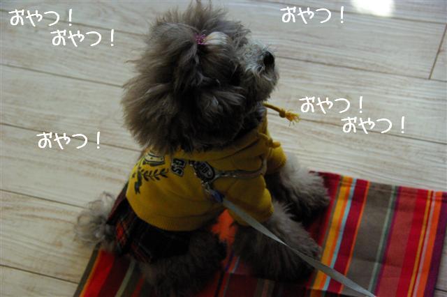 2009.1.23.25トトオズ家&wan lifeプチレッスン 200 (Small)