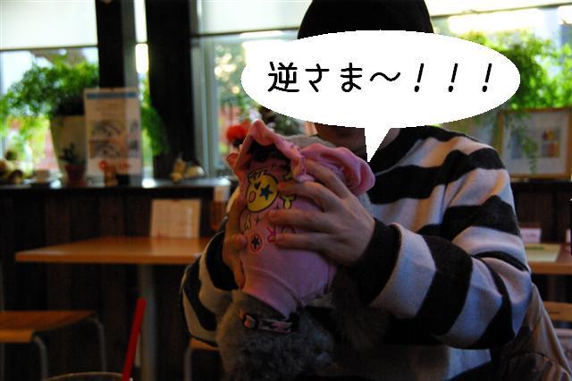 2009.1.23.25トトオズ家&wan lifeプチレッスン 236 (Small)