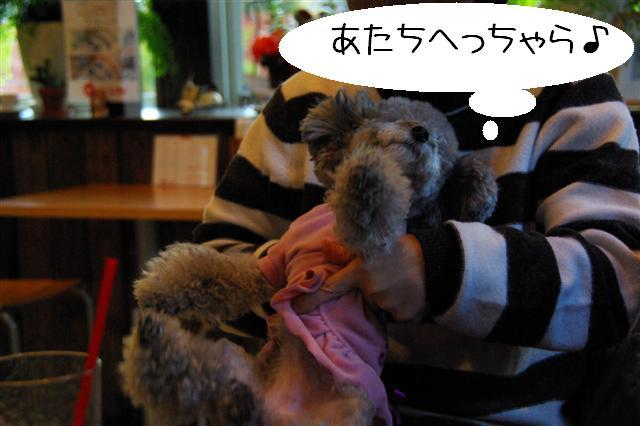 2009.1.23.25トトオズ家&wan lifeプチレッスン 240 (Small)