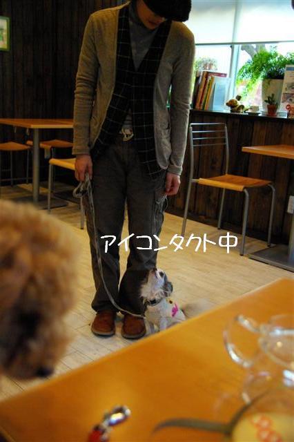 2009.1.23.25トトオズ家&wan lifeプチレッスン 243 (Small)