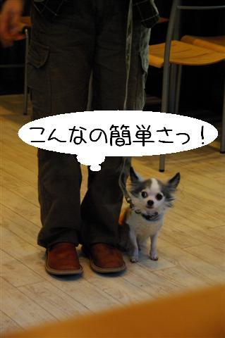 2009.1.23.25トトオズ家&wan lifeプチレッスン 245 (Small)