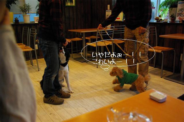 2009.1.23.25トトオズ家&wan lifeプチレッスン 254 (Small)